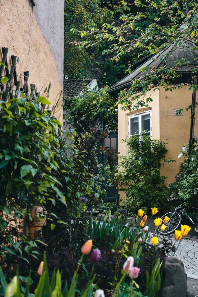 Oslo rue Damstredet fleurs Refuse to hibernate