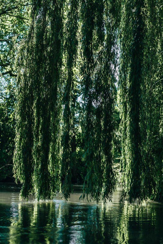 Eure Louviers kayak descente végétation Refuse to hibernate