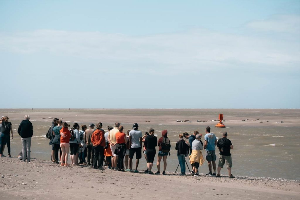 Baie de Somme observer des phoques en groupe Refuse to hibernate