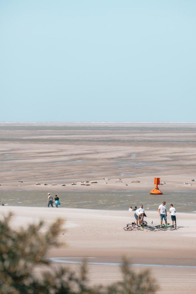 Baie de Somme plage du Hourdel phoques Refuse to hibernate