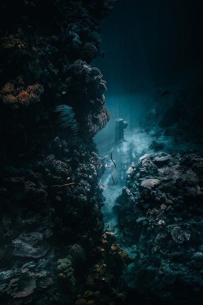 Pforzheim visiter Gazomètre grande barrière de corail Refuse to hibernate