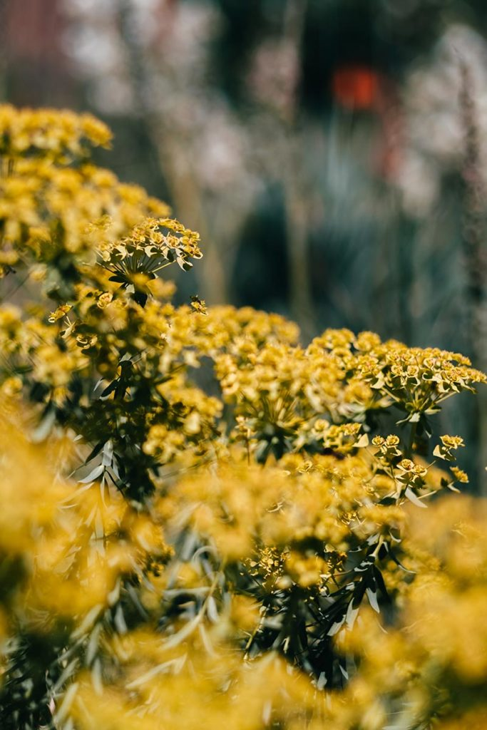 Pforzheim visiter Parc Enzauen fleurs Refuse to hibernate