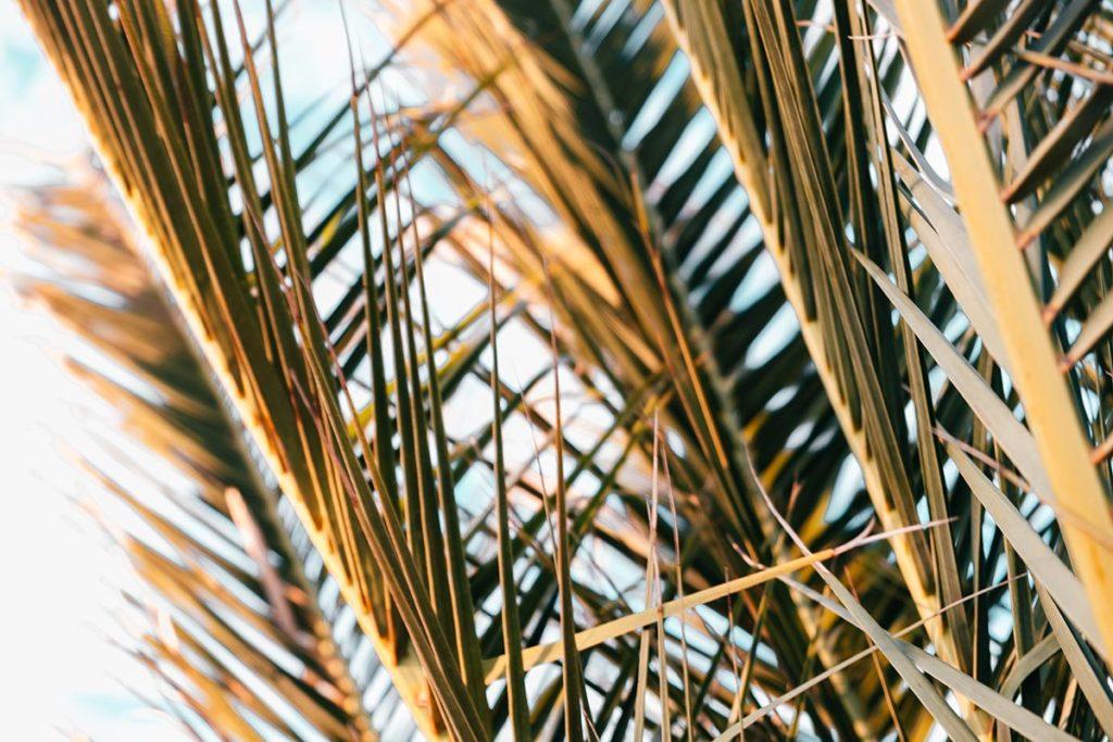Pforzheim visiter Sp6 Strandbar palmier Refuse to hibernate