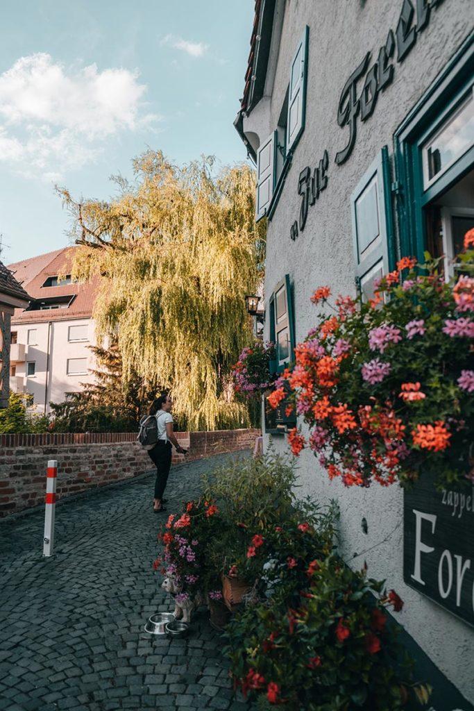 Ulm visiter en 2 jours restaurant Zur Forelle Refuse to hibernate