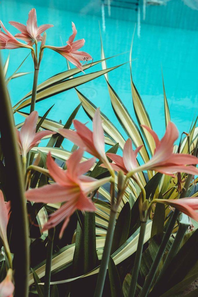 Battambang Hotel Sangker Villa fleurs Refuse to hibernate