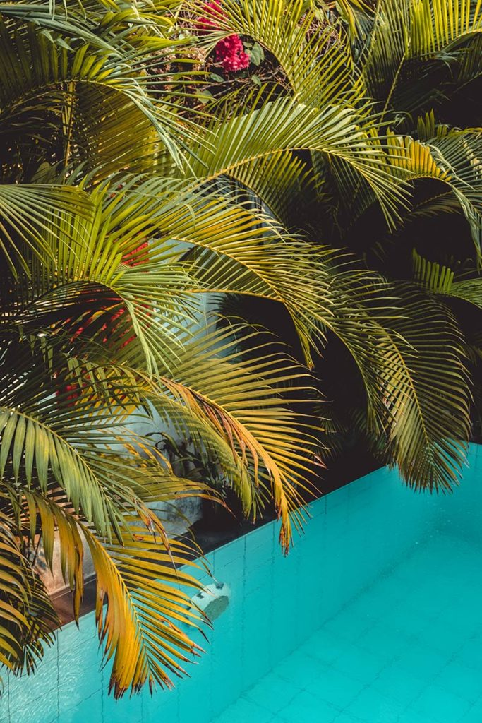 Battambang Hotel Sangker Villa piscine palmiers Refuse to hibernate