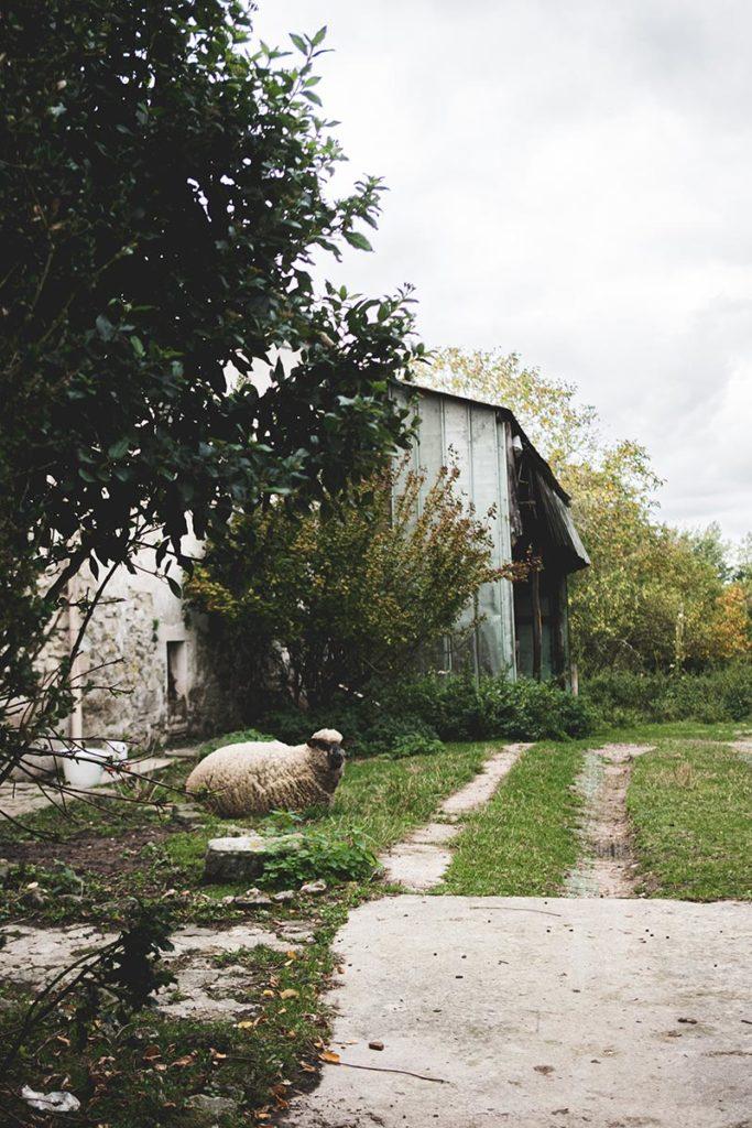 mouton dans un jardin