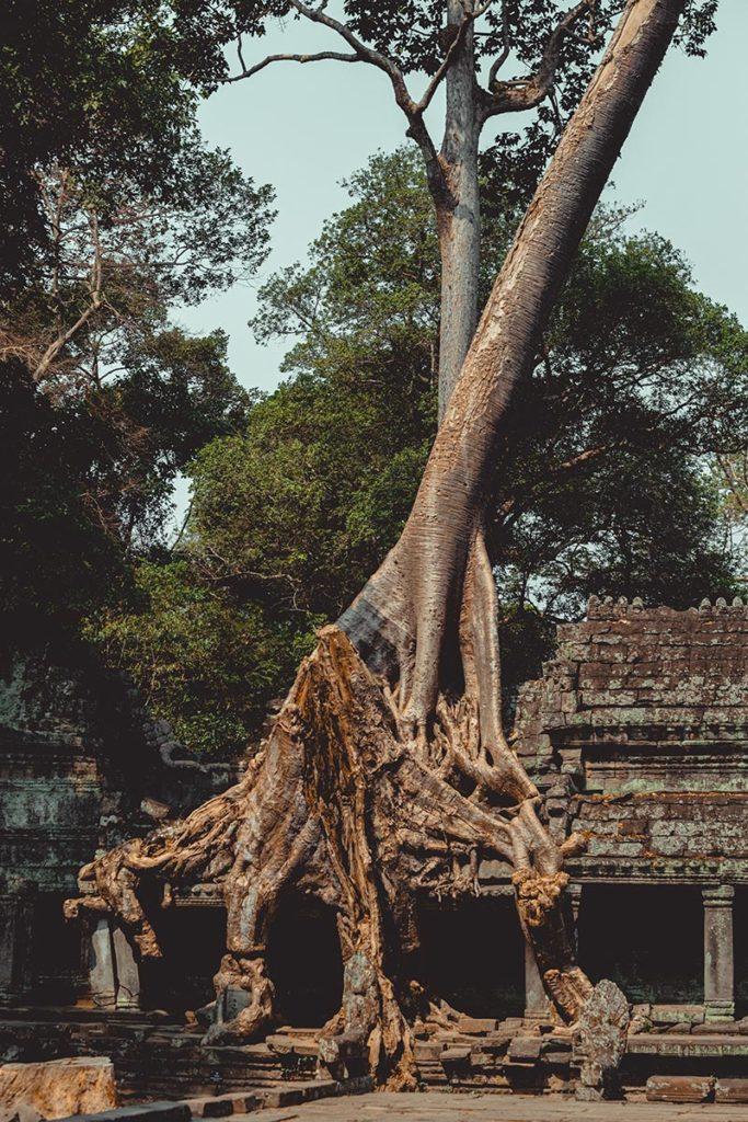 Preah Khan temples d'Angkor impressionnantes racines Refuse to hibernate