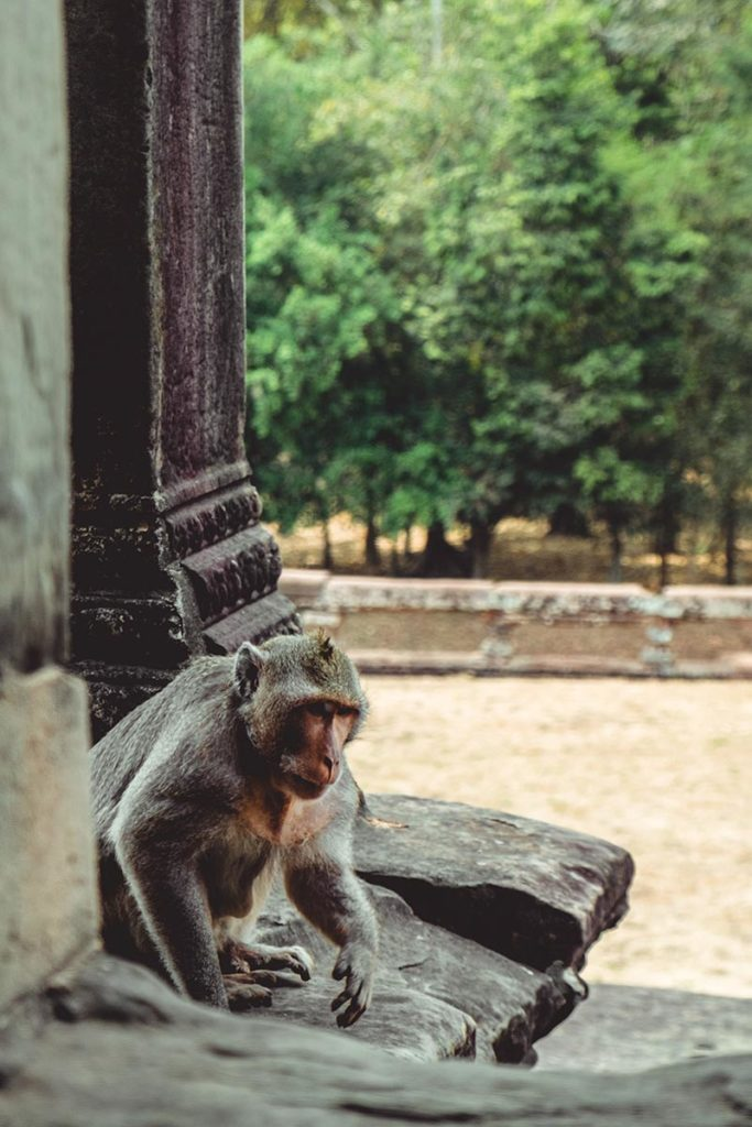 Temple d'Angkor Wat singe Refuse to hibernate