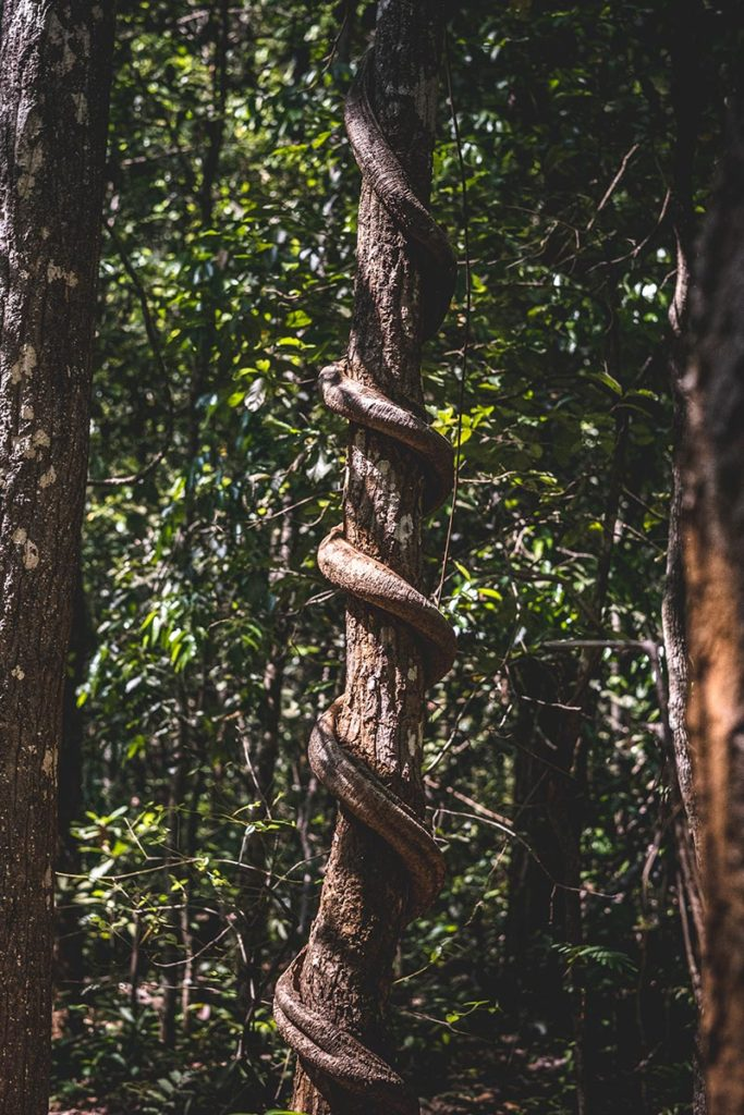 arbre dans la jungle Mondulkiri Refuse to hibernate