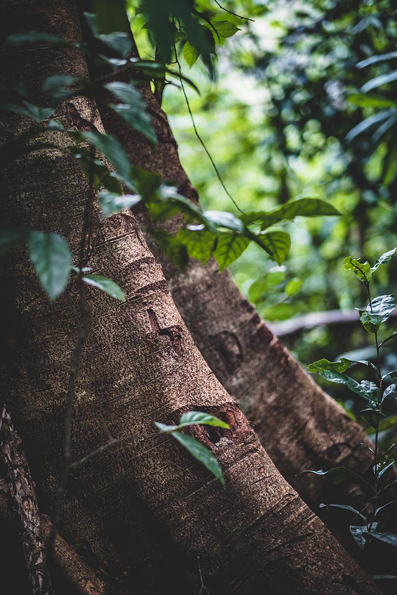 arbre gros plan Mondulkiri Refuse to hibernate