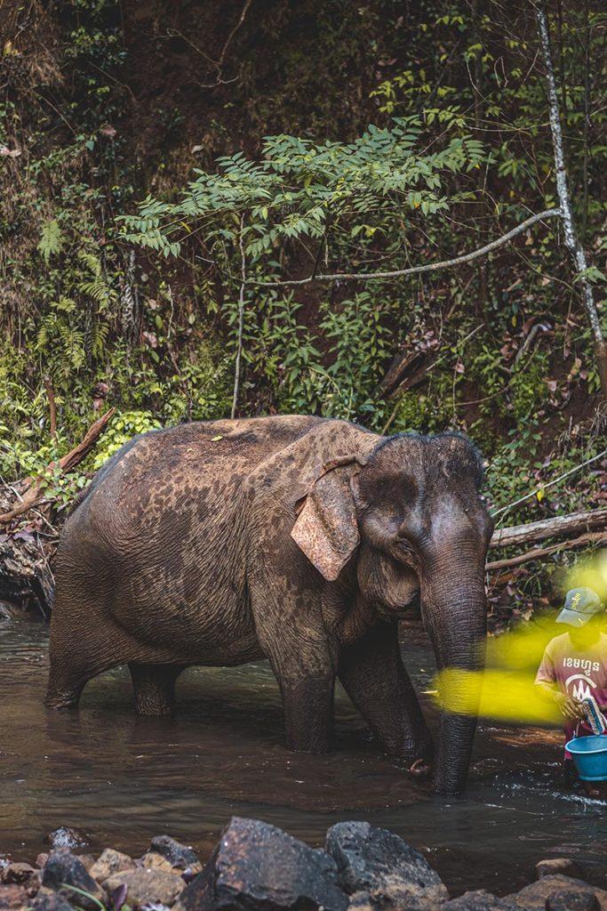 éléphant avec son mahout Mondulkiri Refuse to hibernate