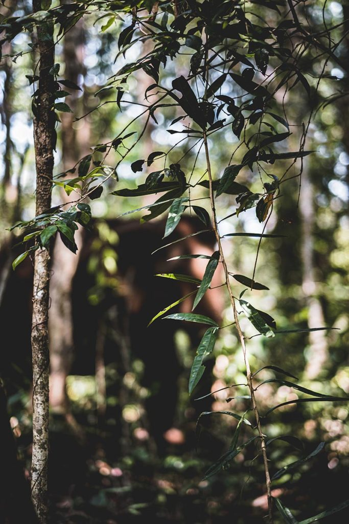 éléphant dans la jungle qui se cache Mondulkiri Refuse to hibernate