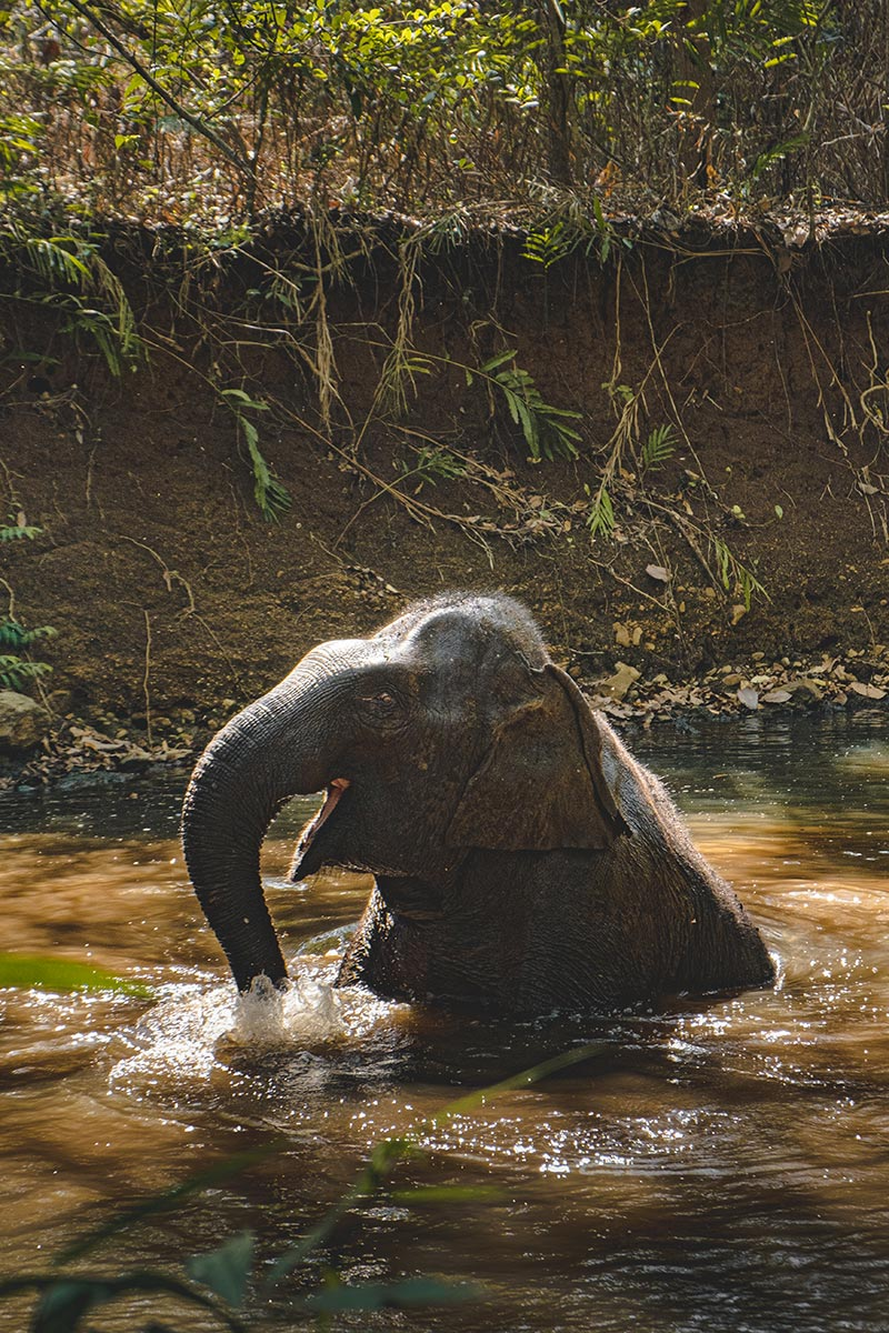 éléphant heureux qui baigne Mondulkiri Refuse to hibernate