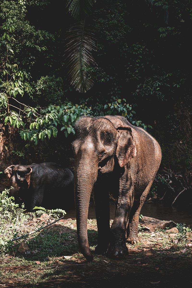 éléphants après le bain Mondulkiri Refuse to hibernate