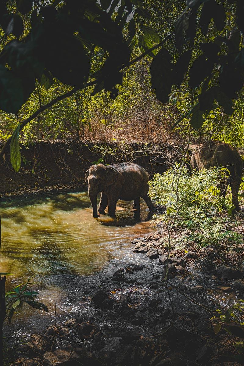 éléphants heure du bain Mondulkiri Refuse to hibernate