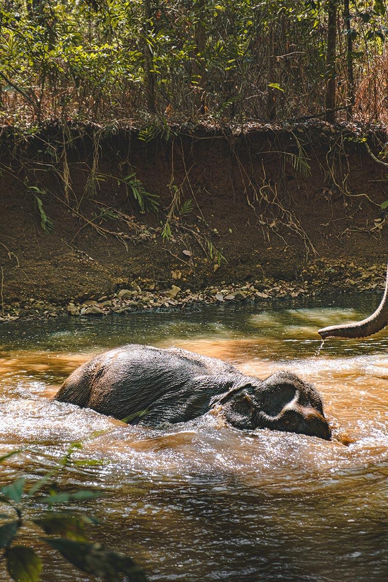 éléphants se baignant Mondulkiri Refuse to hibernate