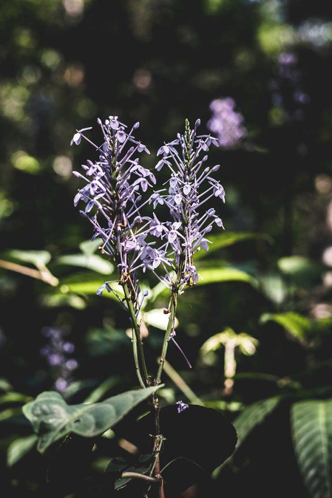fleur dans la jungle Mondulkiri Refuse to hibernate