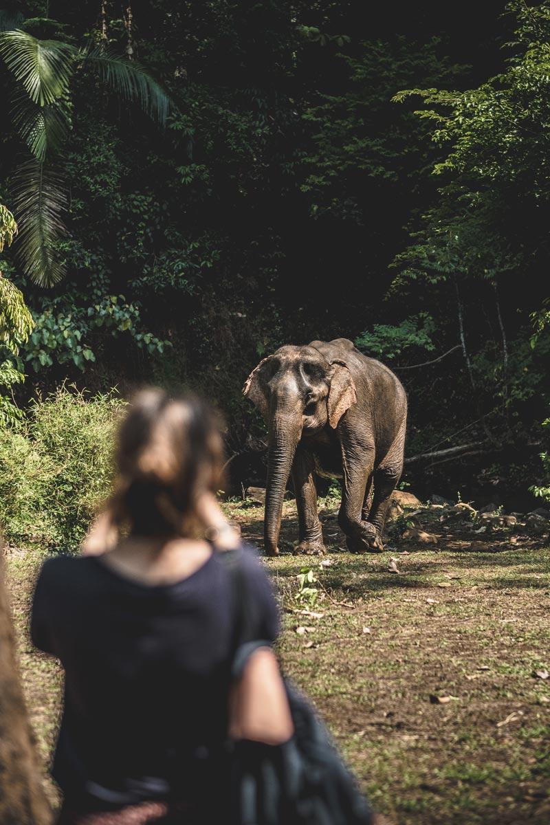 observation des éléphants Audrey prends des photos Mondulkiri Refuse to hibernate