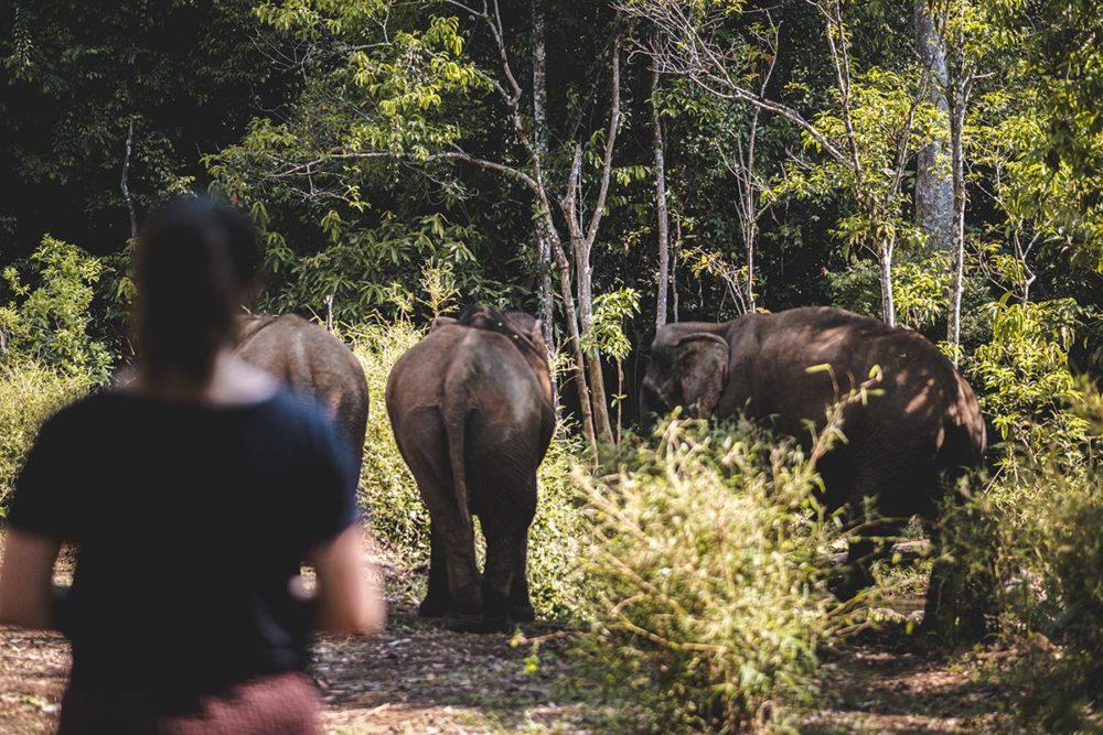 observation des éléphants Mondulkiri Refuse to hibernate