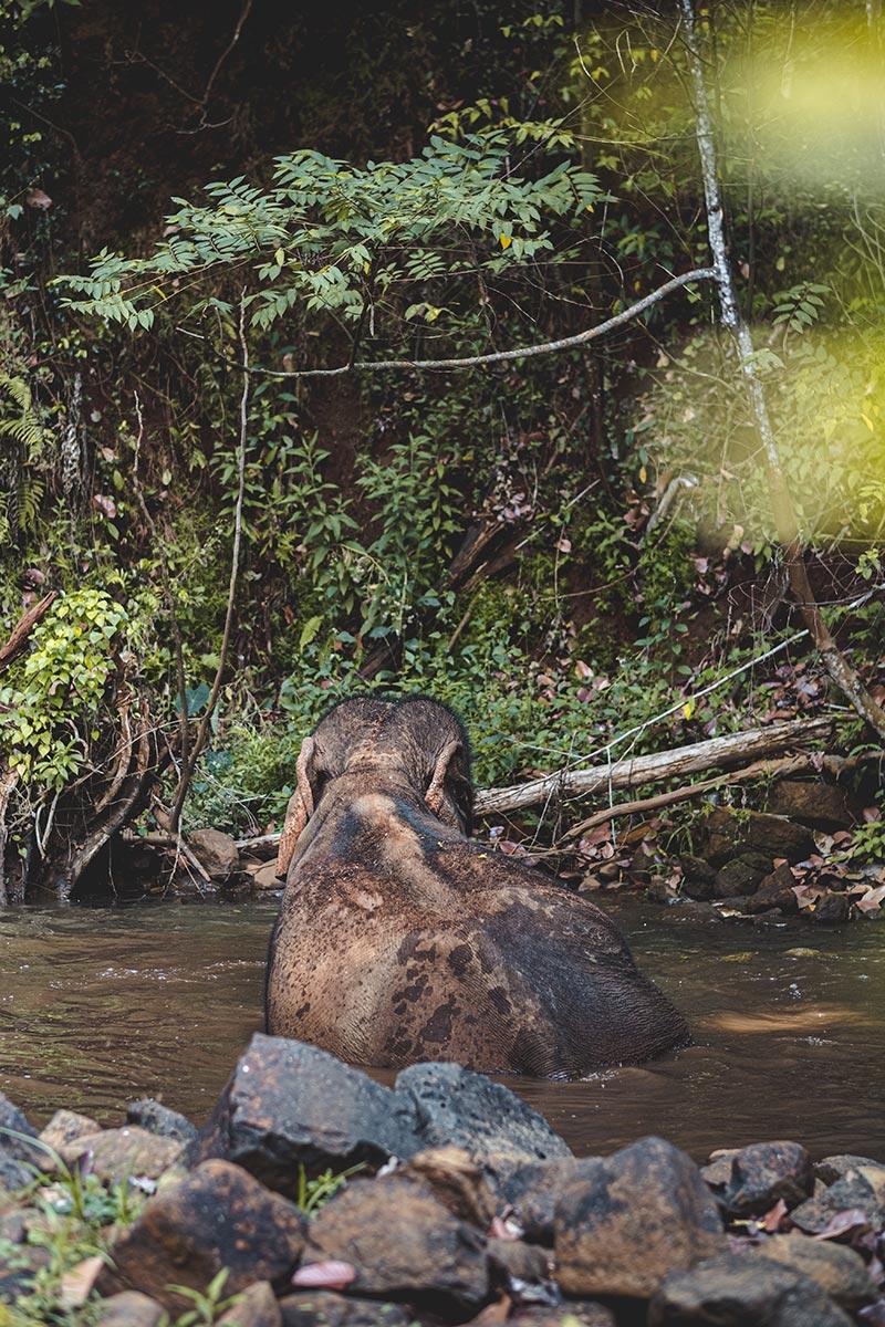 observation éléphants qui se lave Mondulkiri Refuse to hibernate