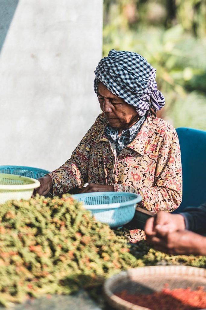 tri du poivre Kampot par une cambodgienne Refuse to hibernate