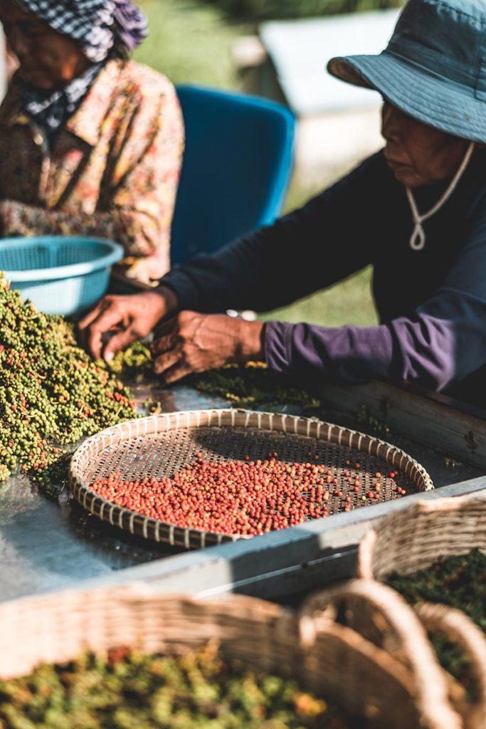 tri du poivre rouge Kampot Refuse to hibernate