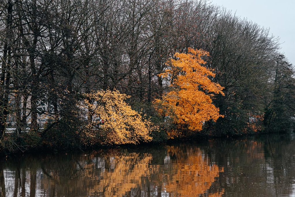 automne Orne Caen Refuse to hibernate
