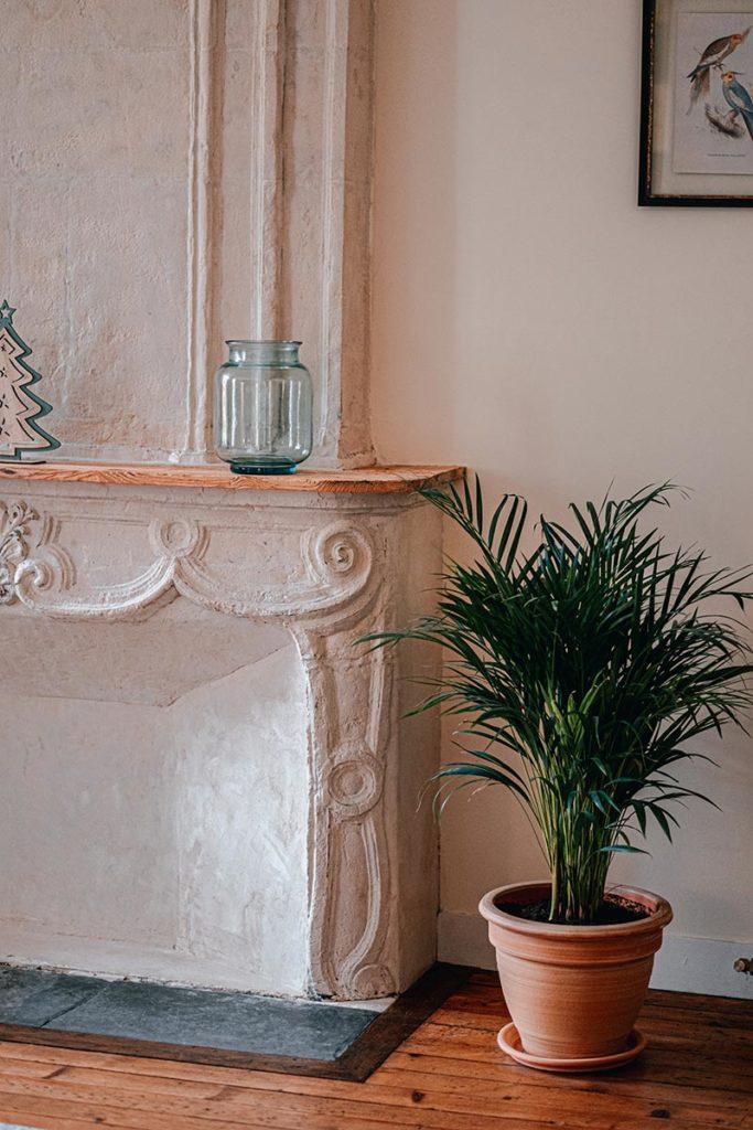 Clos Saint Martin plante cheminée Caen Refuse to hibernate