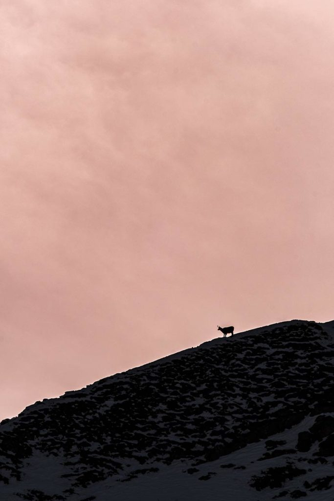 chamois Rock d'Enfer Alpes du Léman Refuse to hibernate