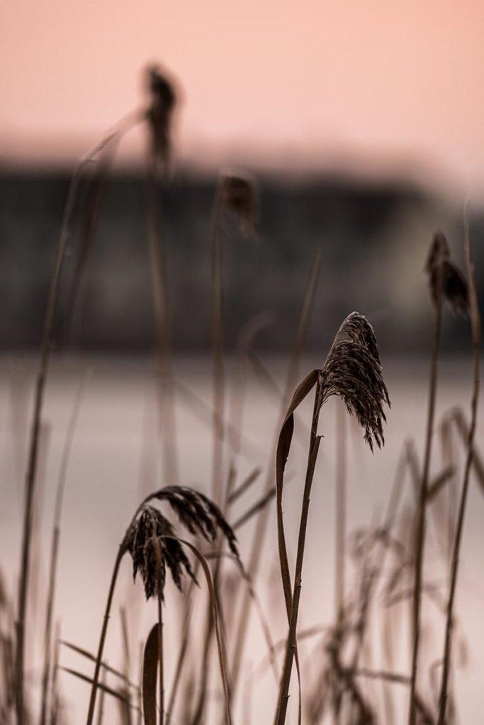 lac rose de l'Abbaye végétation Jura Refuse to hibernate