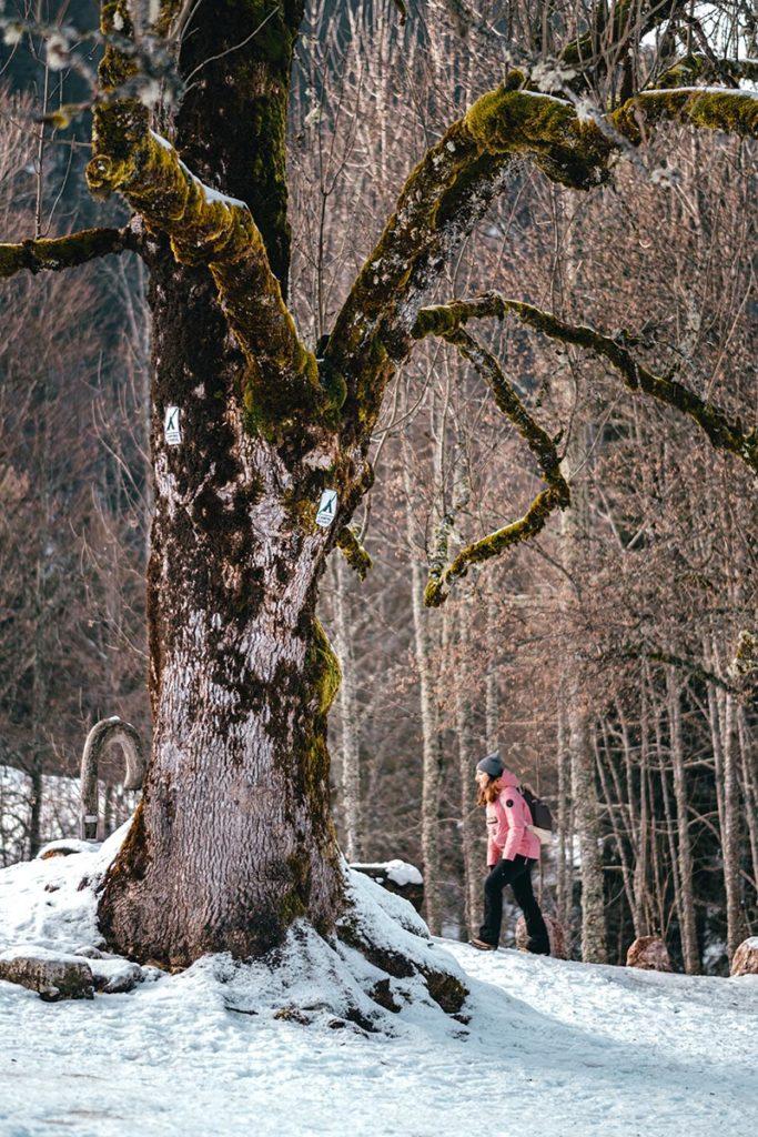 lac du Vallon gelé arbre Alpes du Léman Refuse to hibernate
