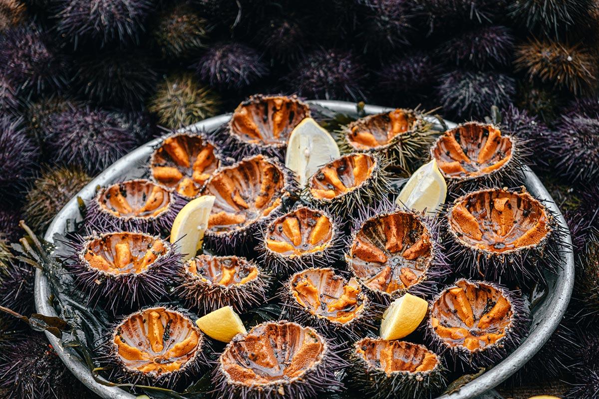 marché des Capucins oursins Marseille Provence Gastronomie Refuse to hibernate