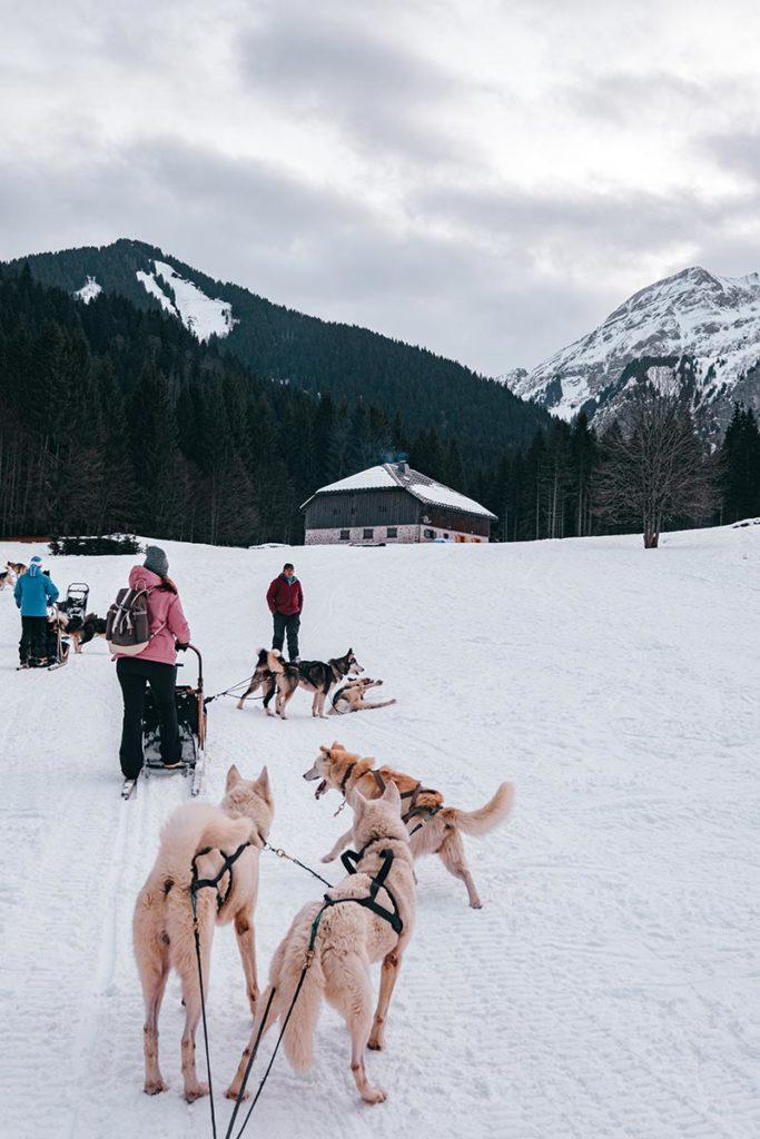 Traineaux Passion Alpes du Léman Refuse to hibernate