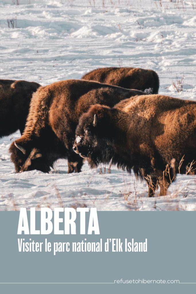 Alberta visiter parc National Elk Island Pinterest