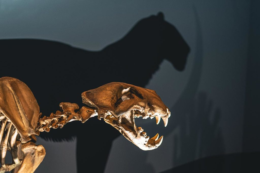 Royal Alberta Museum squelette ombre Edmonton Refuse to hibernate