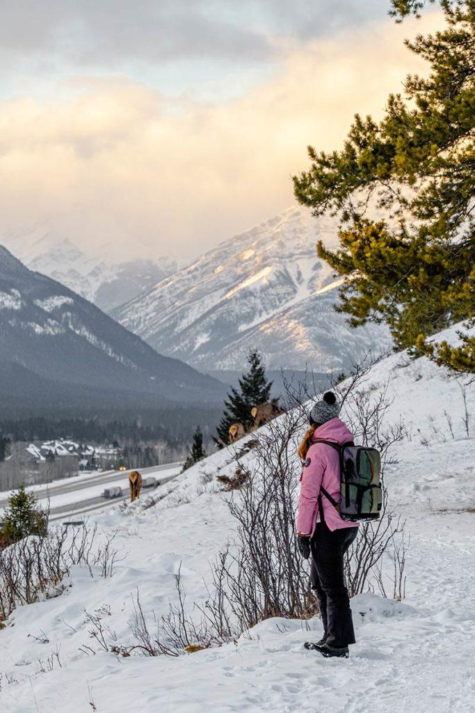 Benchlands Trail Audrey rencontre des cerfs Canmore Refuse to hibernate