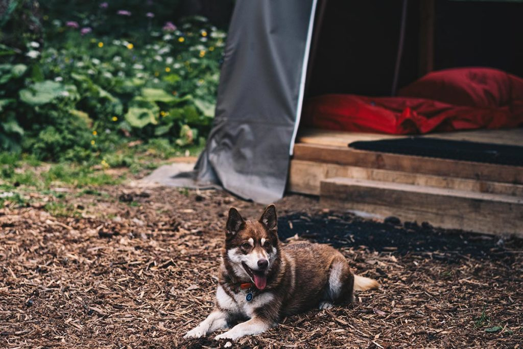 chien Alpes Bivouac Haute-Savoie