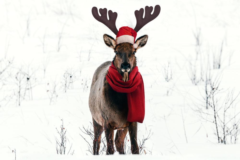 idées cadeaux de Noël pour les passionné(e)s d'aventures Refuse to hibernate